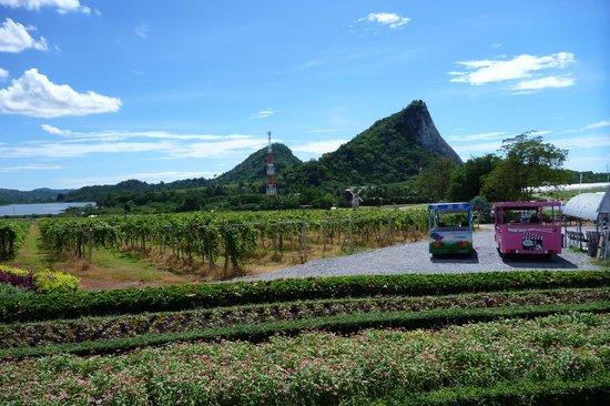 ВиноградникСильверлейк: Vista dei vigneti