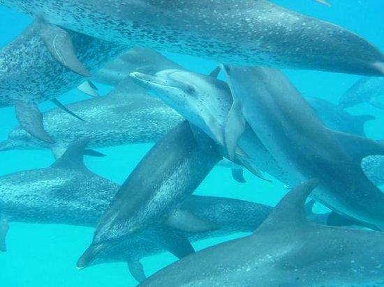 WildQuest: ein Delphinpot