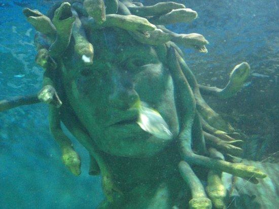 Sea Life Centre Great Yarmouth: Sealife