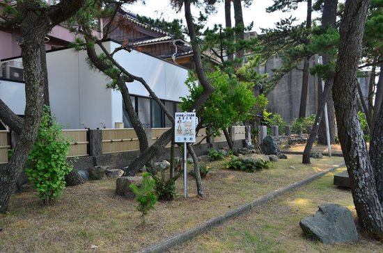Meotoiwa Front Approach : 松林が続きます