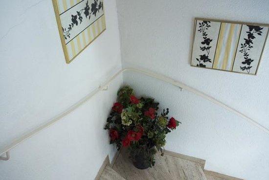 Acanthushotel: En av de vidriga fuskväxterna