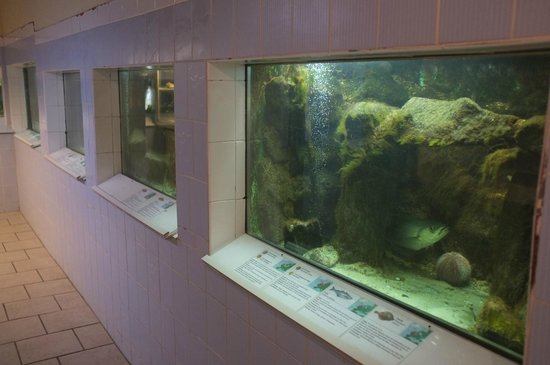 Nordseeaquarium Borkum