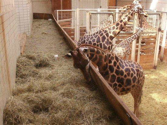ZOO Liberec : Zoo de Liberec