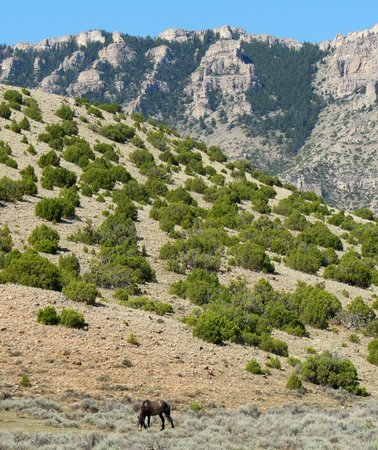 Pryor Mountain Wild Horse Range: Pryor Mt. Wild Horse Range
