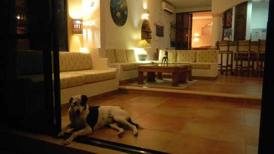 The Reef Condominiums : Resident dog