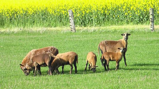 Hofgut Wollin: Leben auf dem Bauernhof