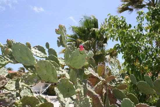 Villa Sol Palmas: Landscaping