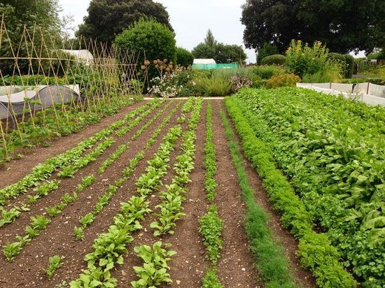 Beautiful Vegetable Garden Picture Of Belmond Le Manoir Aux Quat