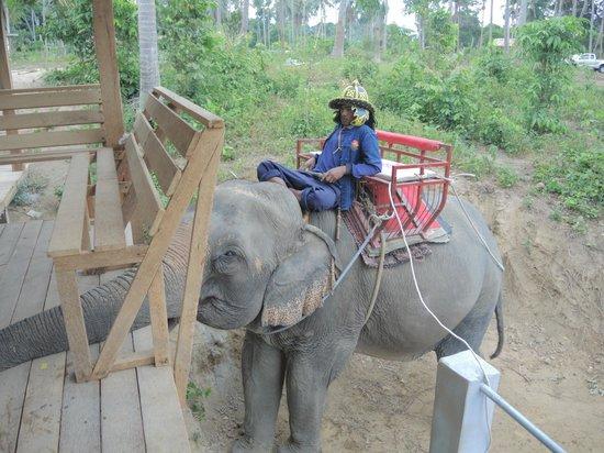 Elephant ride at Namuang Safari Park - Picture of Namuang Safari Park, Ko Sam...
