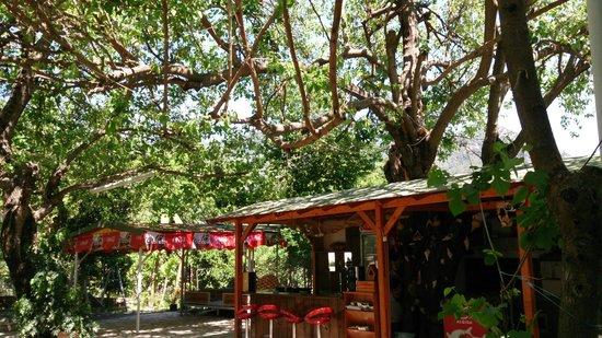Ekincik Hostel: 100 yasındakı dut ağacının altında yemek  keyfi ve huzur