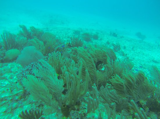Dressel Divers: ..