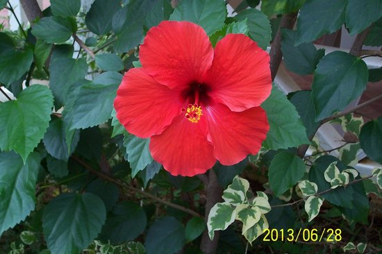 White Sands Negril: Beauty in bloom