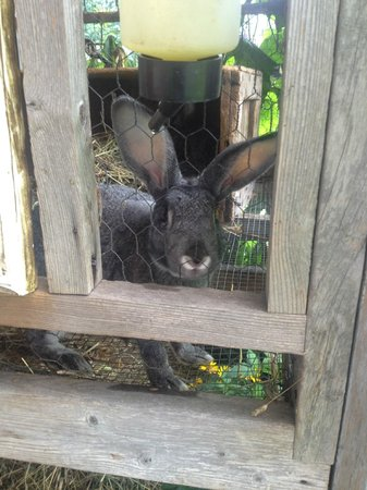 Hanna House Bed and Breakfast: Friendliest Bunnies Ever
