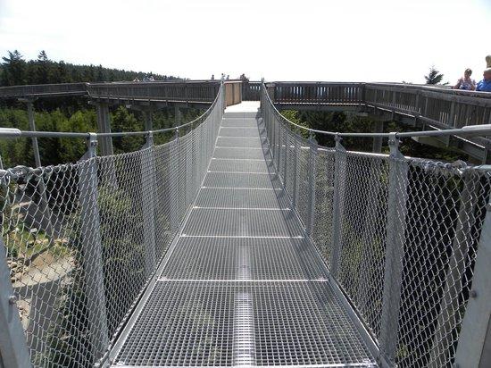 Waldwipfelweg: optionale Hängebrücke