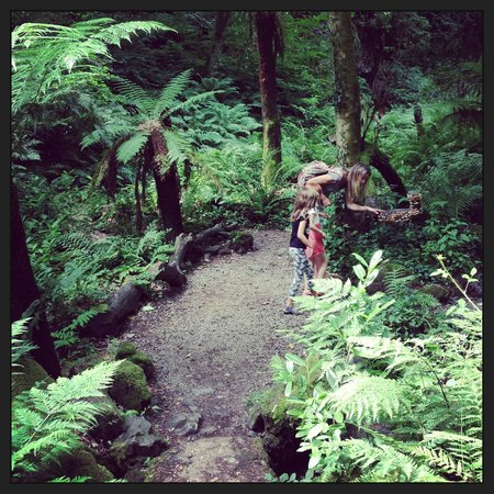 Canonteign Waterfalls and Country Park: Fern Forest