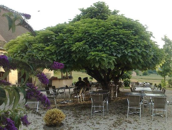 Les terrasses de Lascaux: Agréable moment sous les catalpa en terrasse