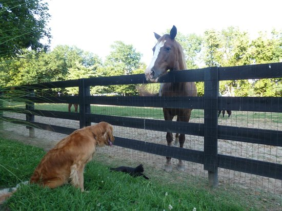 1851 Historic Maple Hill Manor Bed & Breakfast : Some of the friendly animals