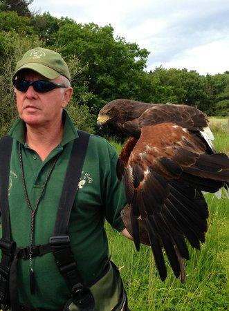 Hawks on Walks: Hawk walk