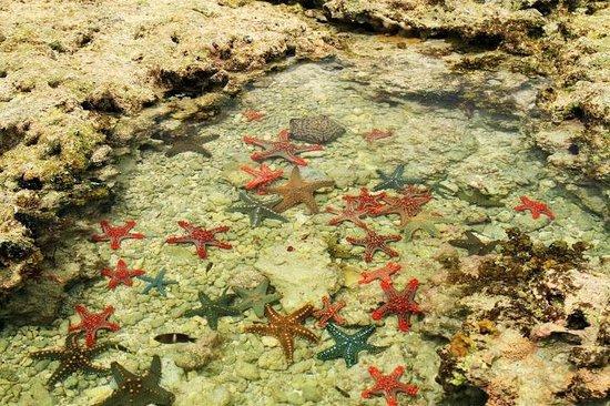 Pwani Mchangani, Tansania: zahlreiche Seesterne bei Ebbe