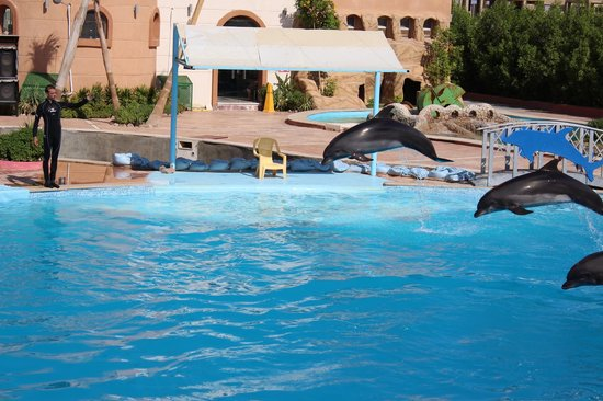my dolphin show 1000