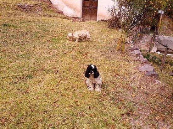 Etnikas Ayahuasca Retreats: Cute cocker spaniels brightened up my day!