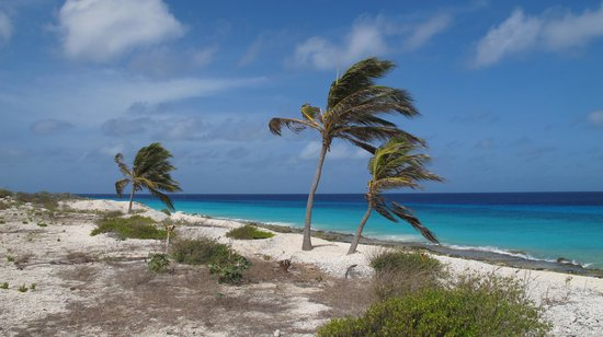 Bonaire Exclusive Bungalows: pink beach