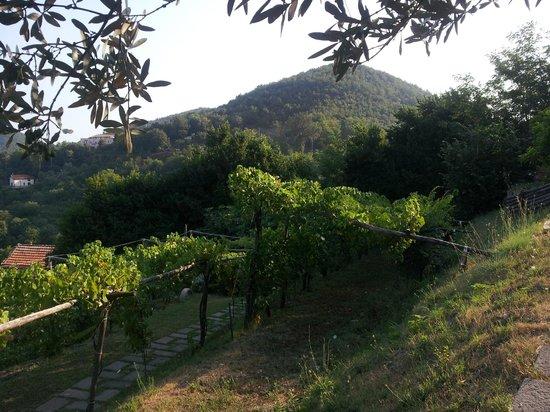 Agricola Villa Lupara: Panorama