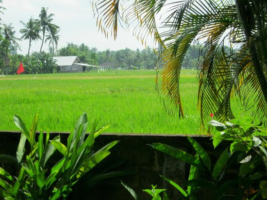 Mandala Desa: Rice paddies- view from room