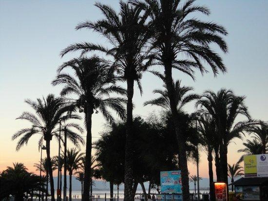 Playa de Palma El Arenal : spiaggia