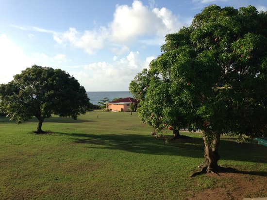 Hector's by the Sea: View from the Mango room - complete with mango trees and the water