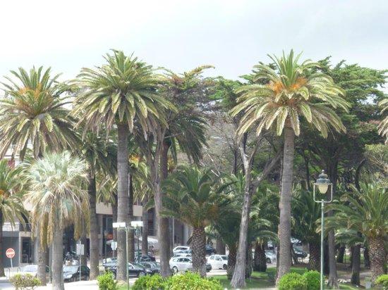 Hotel Sao Mamede: Пальмы рядом с казино и отелем
