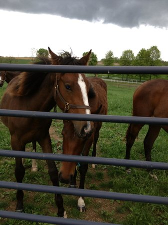 Cassel Vineyards of Hershey: Horses greeting winery customers