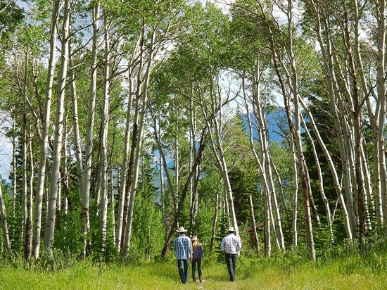 JJJ Wilderness Ranch: walk to cabin from the barn