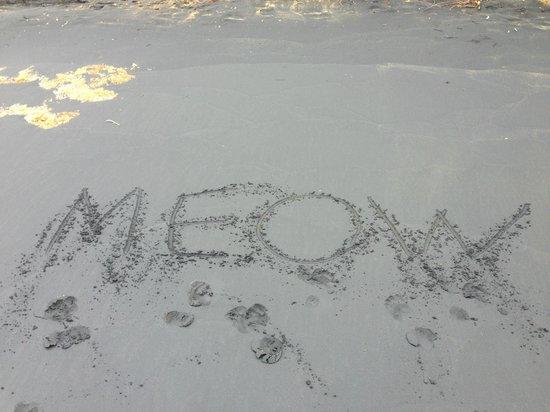 Black Sand Beach: Playa Negra - Super Troopers style...