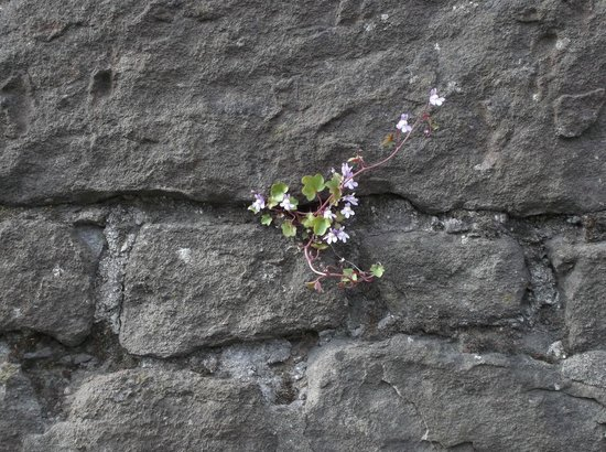Anderson's Bed and Breakfast: Flowers growing from the wall