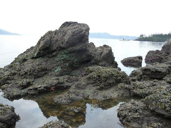 Doe Bay Resort & Retreat: This is one of the beaches at low-tide and the rocks are host to massive starfish