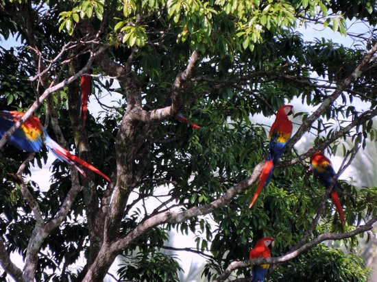 LagunaVista Villas : You don't have to go far to see macaws