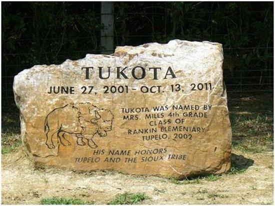 Tupelo Buffalo Park & Zoo: Gravesite of white buffalo