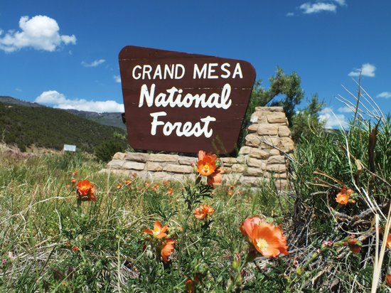 Grand Junction, CO: Entrance to Grand Mesa National Forest