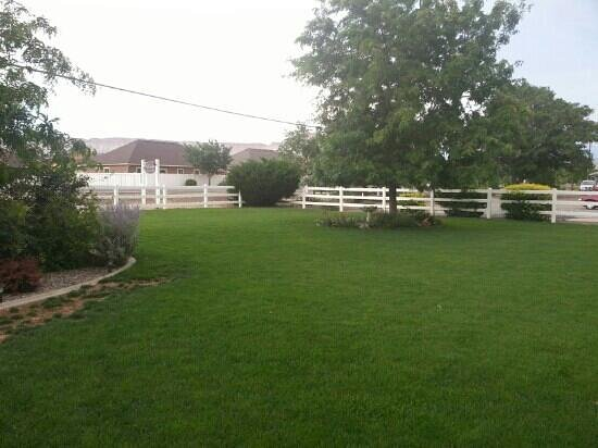 Grand Junction Bed and Breakfast: yard