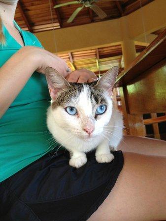 Hotel Vista de Olas: Kung Fu, a cat that lives on property