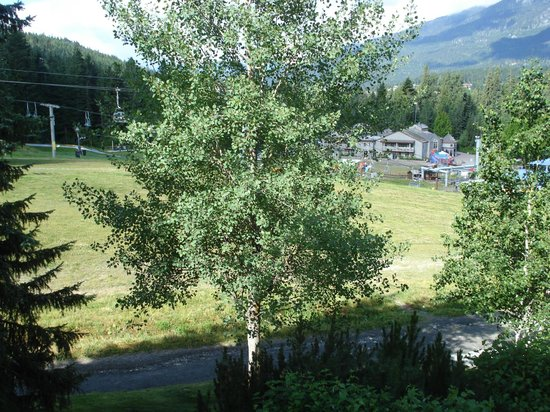 Aspens on Blackcomb: View from the balcony