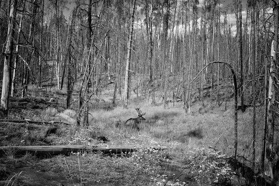 Elk - Grizzly Country Wildlife Adventures