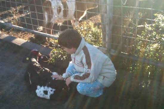 Kerry, Australia: the baby calves were the favourites