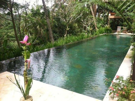 Umah Lu'ung: pool