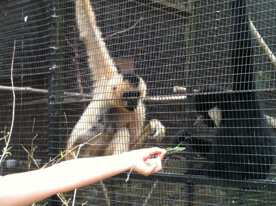 Parc de Cleres: les singes