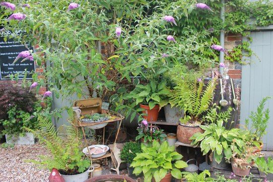 The Horse Guards Inn : Some of the plants in the quirky garden