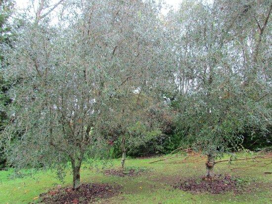Mercury Orchard Accommodation : Citrus Orchard
