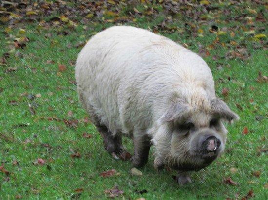 Mercury Orchard Accommodation: Pig 1 of 2