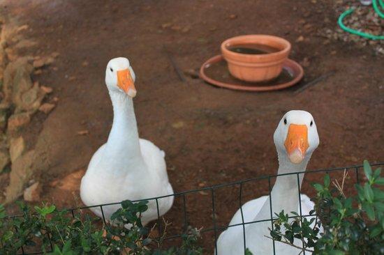 Relais La Suvera: Ducks in the private garden